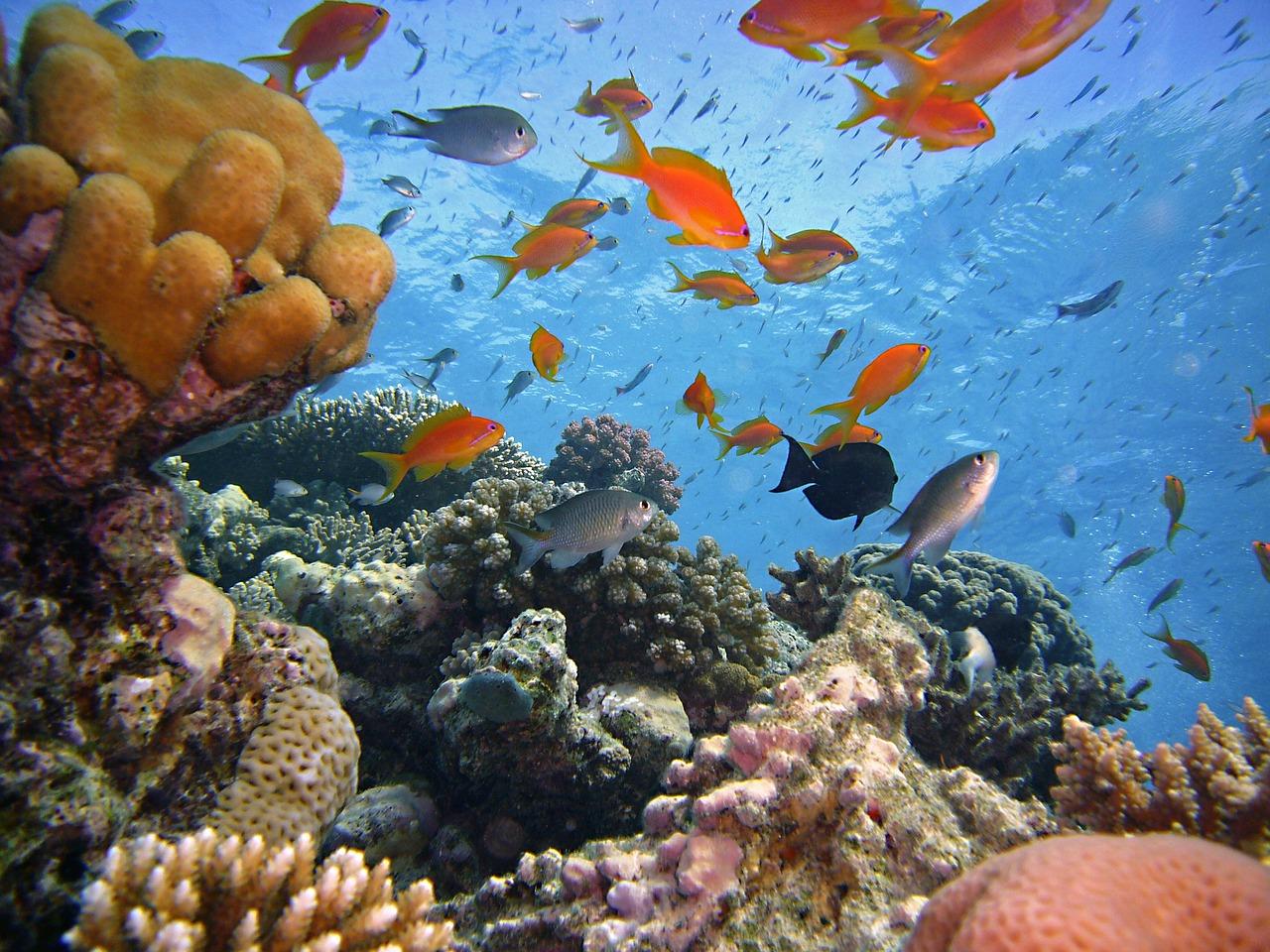 Fische makadi bay for Lebensraum fische