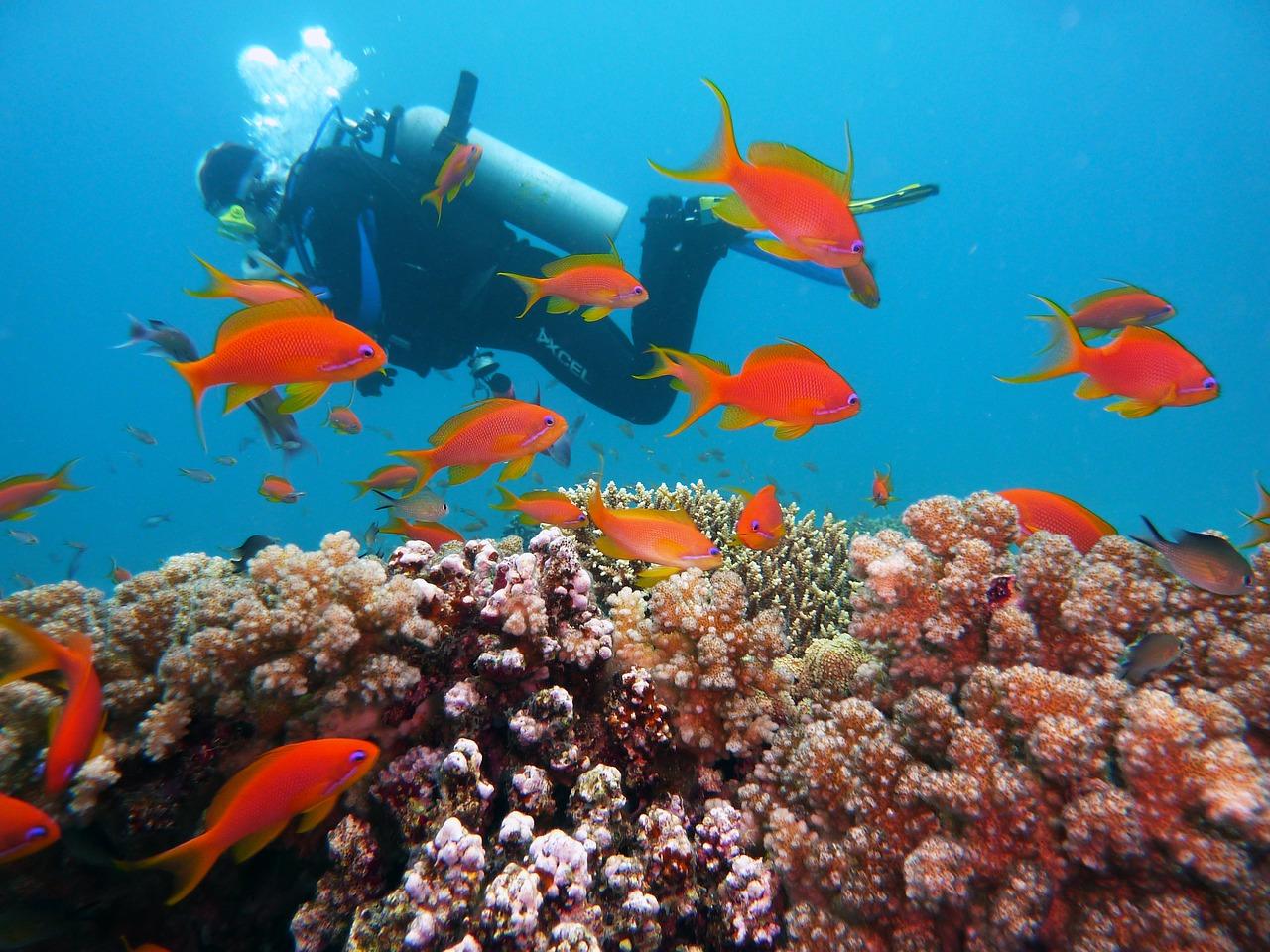 Tauchen Und Schnorcheln Makadi Bay